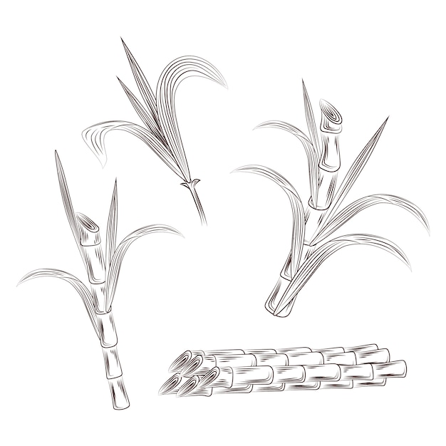 Sugar cane stalks are loaded into a truck during the ... |Sugar Cane Stalks