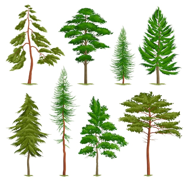 Set of realistic pine trees of various type isolated on white Free Vector