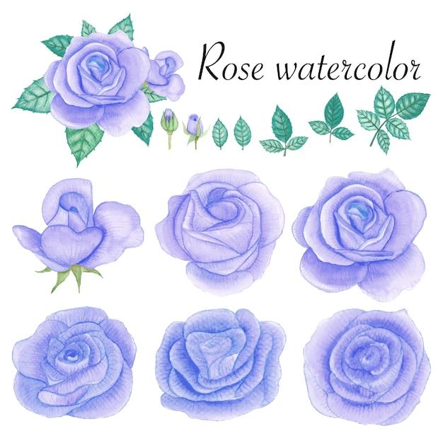 Set of rose watercolor elements. Premium Vector