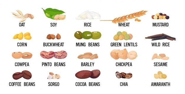Набор семян бобов и зерна органическая здоровая вегетарианская еда коллекция Premium векторы