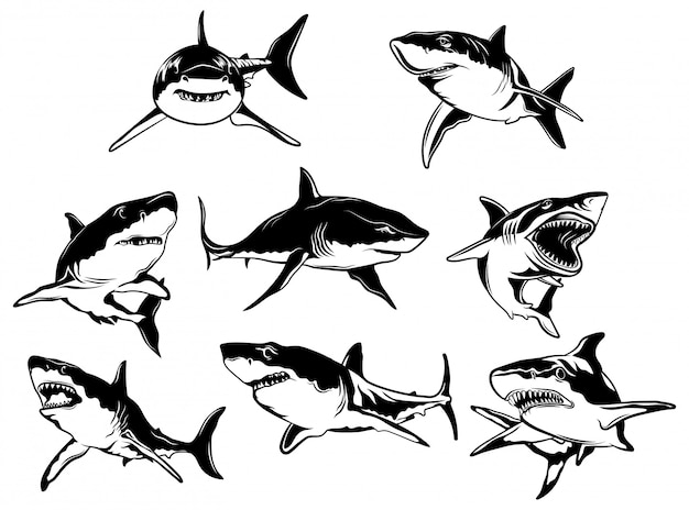 Premium Vector Set Of Sharks Collection Of Silhouettes Of Predatory Swimming Marine Fish Download 137 shark silhouette free vectors. https www freepik com profile preagreement getstarted 7765391