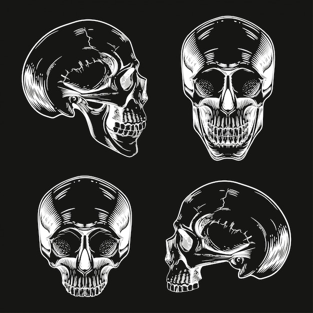 A set of skulls in the style of engraving Premium Vector