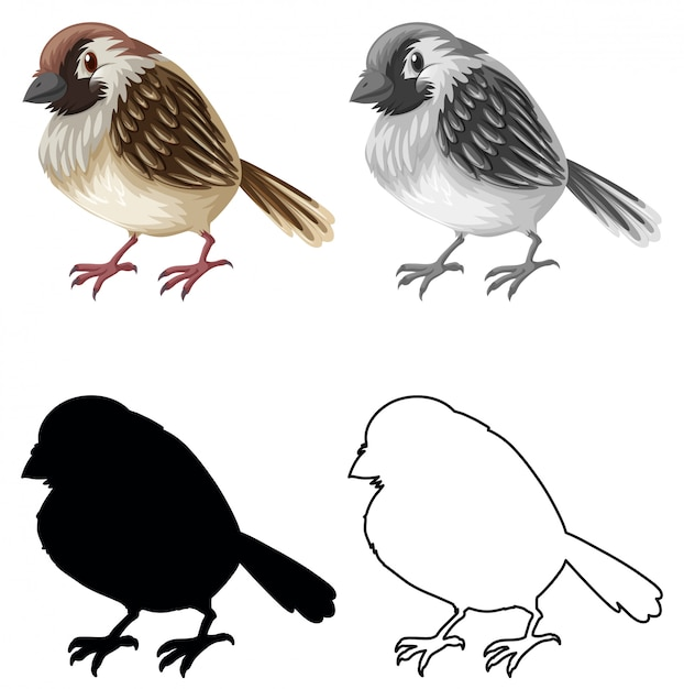 Set of sparrow character Free Vector