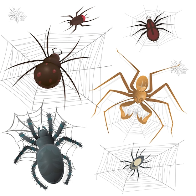 Set of spiderweb with spiders Premium Vector
