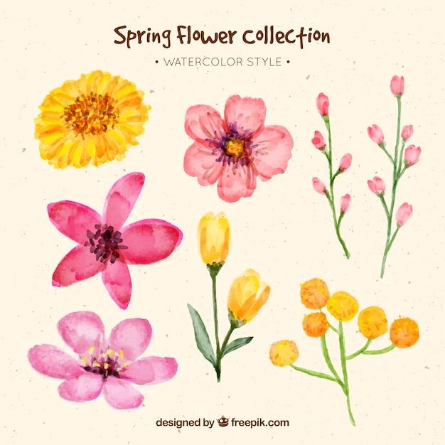 Set of spring watercolor flowers Free Vector