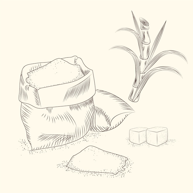 Set of sugar cane. hand draw cane leaves. Premium Vector
