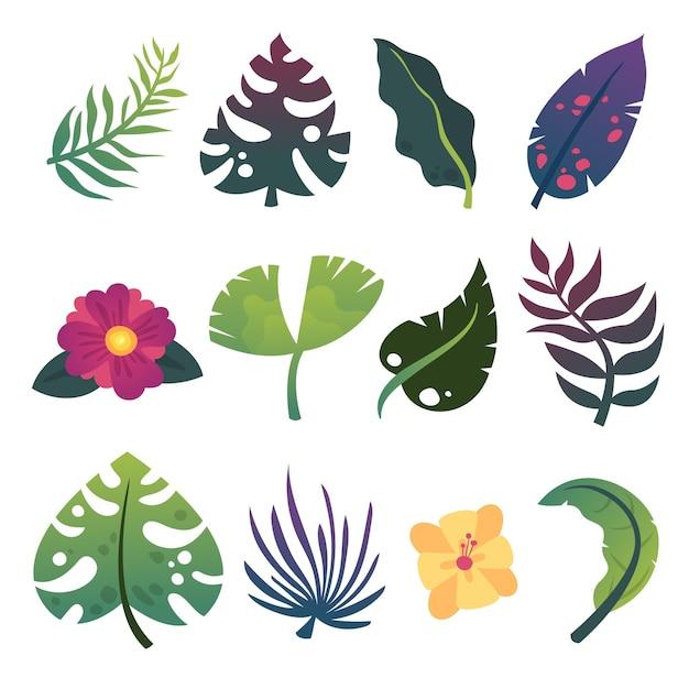 Insieme di foglie e fiori esotici estivi Vettore gratuito