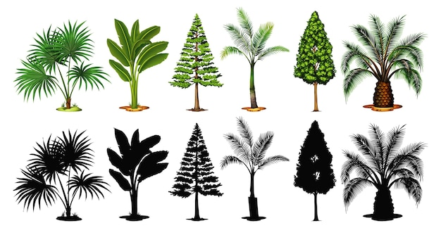 Set of tree and shadow Free Vector