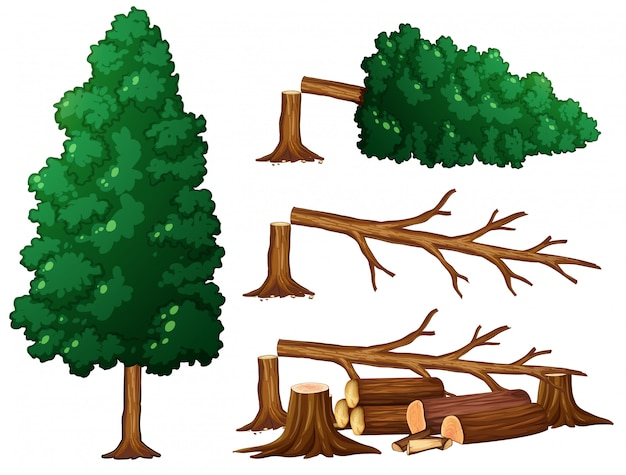 A set of tree and wood Premium Vector
