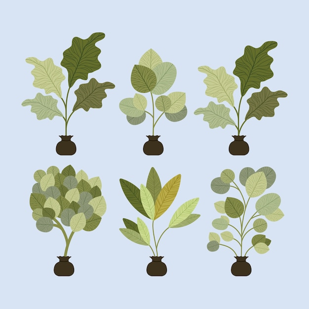 Set trees plants cultivated in sacks Premium Vector