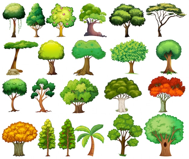 Set of trees Premium Vector