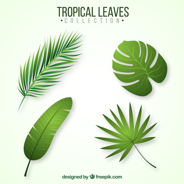 Free Vector Set Of Tropical Leaves Choose from over a million free vectors, clipart graphics, vector art images, design templates, and illustrations created by artists worldwide! free vector set of tropical leaves
