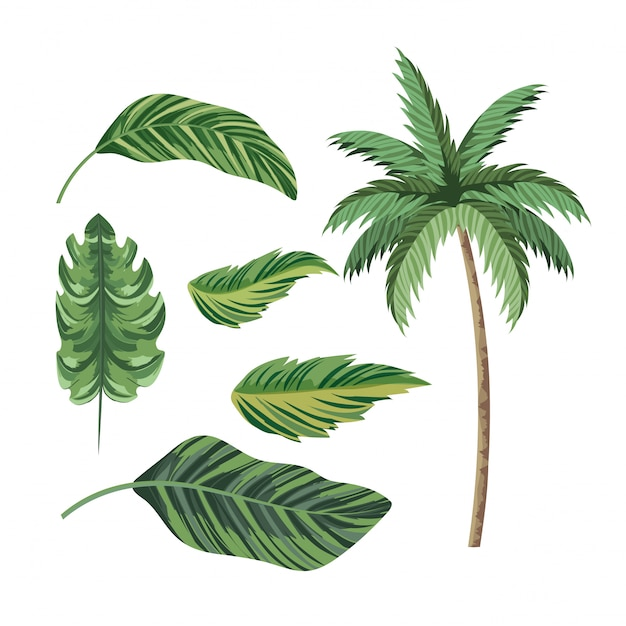 Set tropical palm tree and exotic leaves Premium Vector