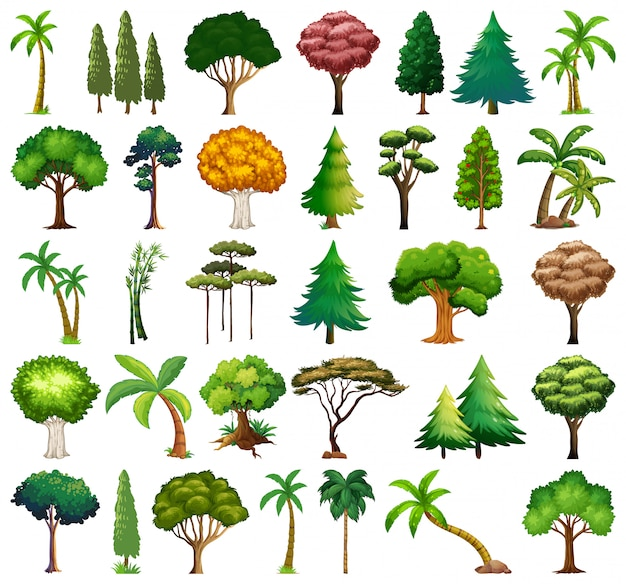 Set of variety plants and trees Free Vector
