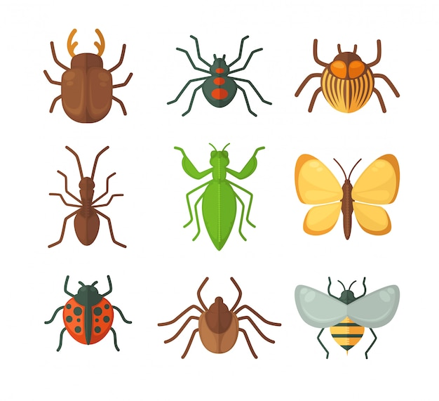 Set of various insects Premium Vector