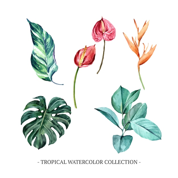 Set of various isolated foliage watercolor Free Vector