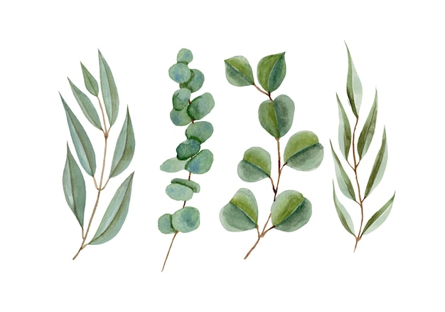 Set of watercolor eucalyptus branch leaves isolated on white Premium Vector
