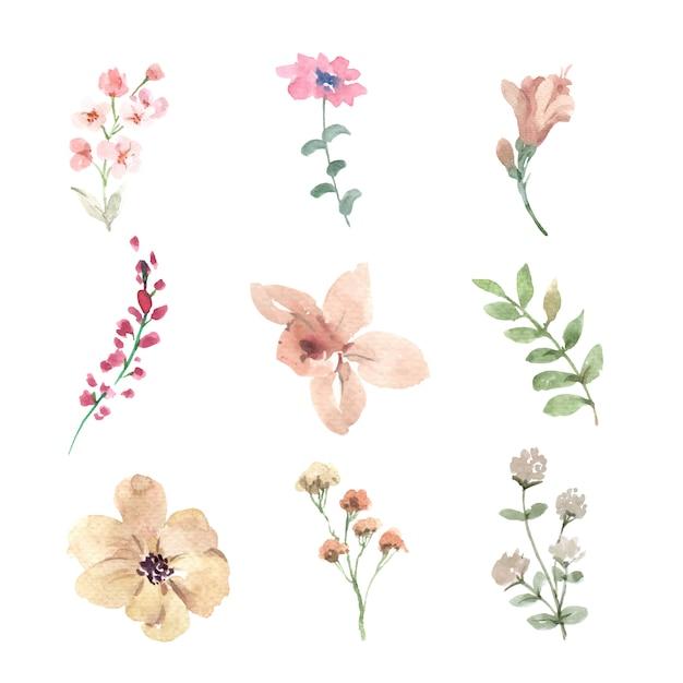 Insieme del germoglio di fiore dell'acquerello, illustrazione disegnata a mano Vettore gratuito