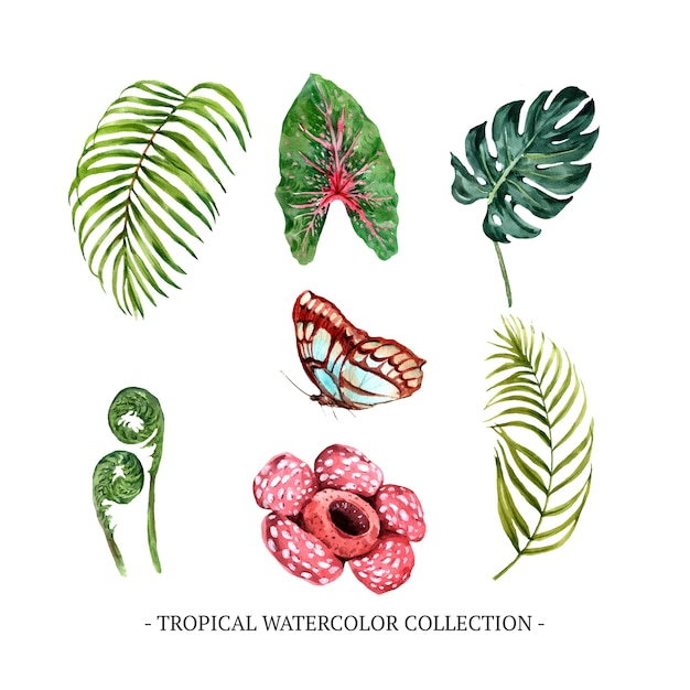 Set of watercolor foliage, floral, butterfly Free Vector
