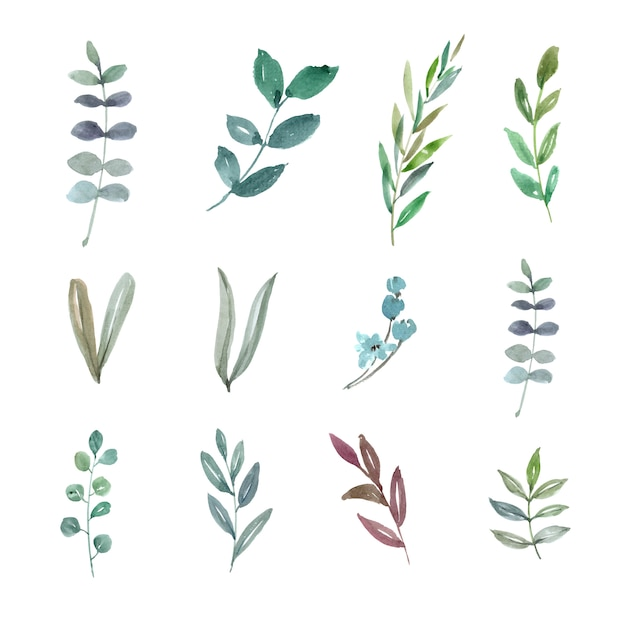 Set of watercolor foliage, hand-drawn illustration of elements isolated Free Vector
