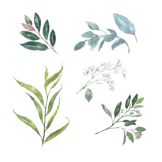 Set of watercolor foliage, illustration of elements isolated white. Free Vector