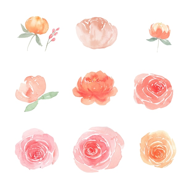 Set of watercolor peony and rose, illustration of elements isolated white. Free Vector