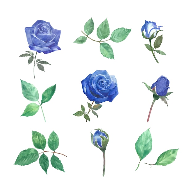 Set of watercolor rose, hand-drawn illustration of elements isolated white. Free Vector