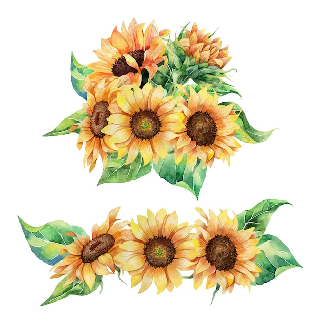 Sunflower Images Free Vectors Stock Photos Psd