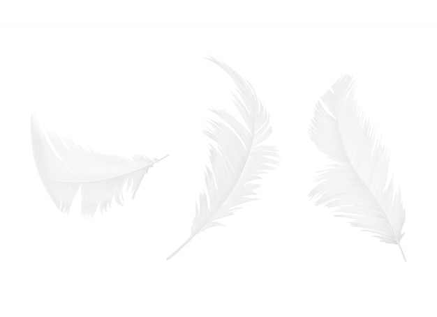 Set of white bird or angel feathers in various shapes, isolated on background Free Vector