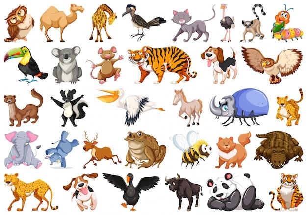 Set of wild animal Free Vector