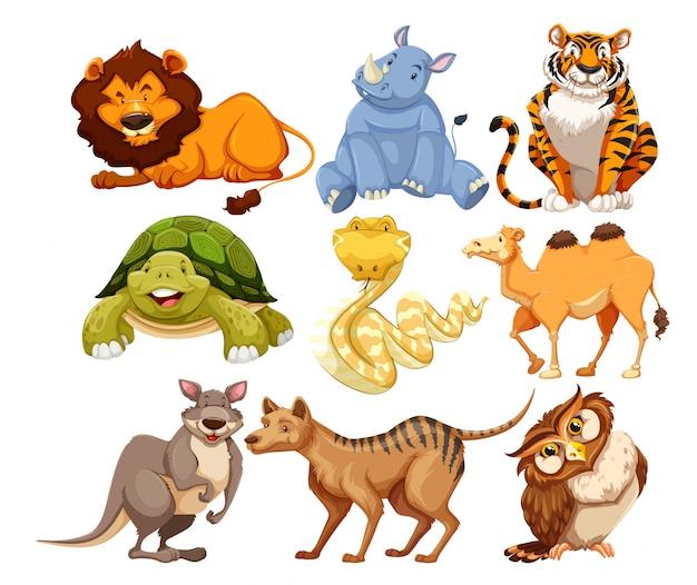 Set of wild animals Free Vector