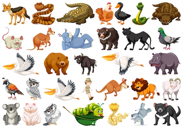 Free Animals Vectors 204 000 Images In Ai Eps Format