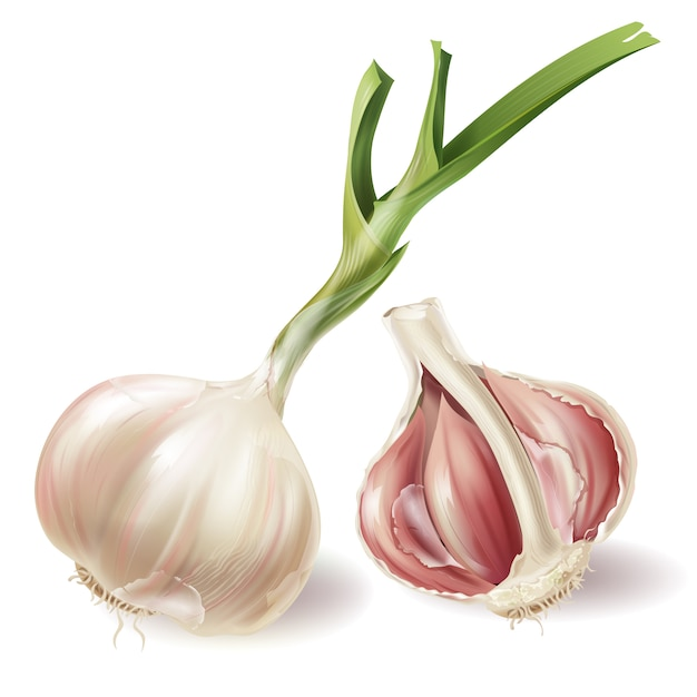 Set with sprouted head of garlic and half of bulb in peels, isolated on white background Free Vector