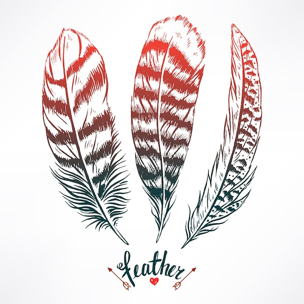 Набор из трех красивых перьев. рисованная иллюстрация Premium векторы