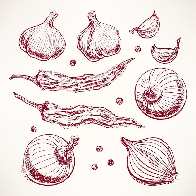 野菜とスパイスをセットします。手描きイラスト Premiumベクター