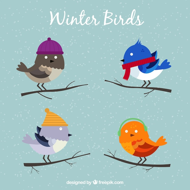 Several cute birds ready for winter