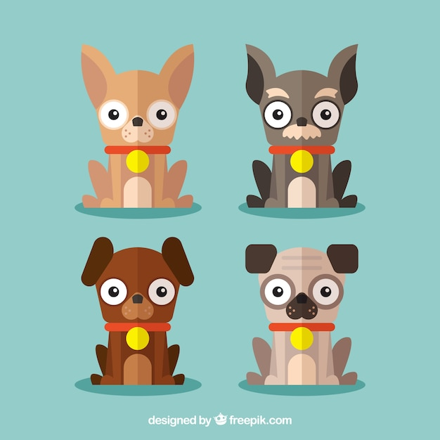Several funny dogs in flat design