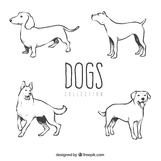 Several hand-drawn dogs of different\ breeds