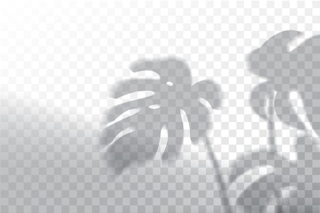 Тень, эффекты наложения макета, оконная рама и лист растений Premium векторы