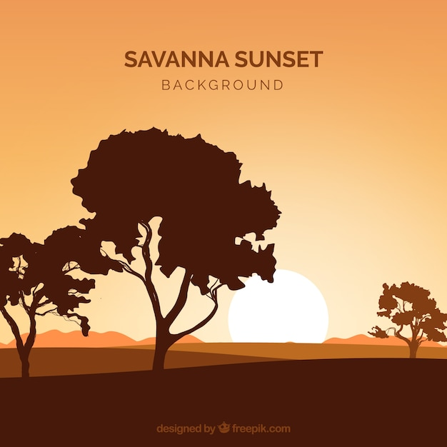 Shadowy forest landscape in the savanna