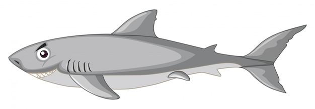 Uno squalo isolato Vettore gratuito