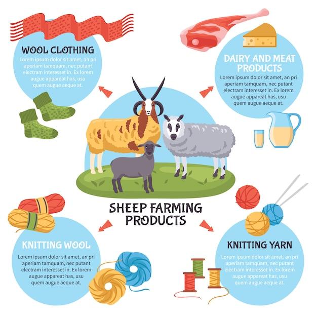 Infografica allevamento di pecore Vettore gratuito