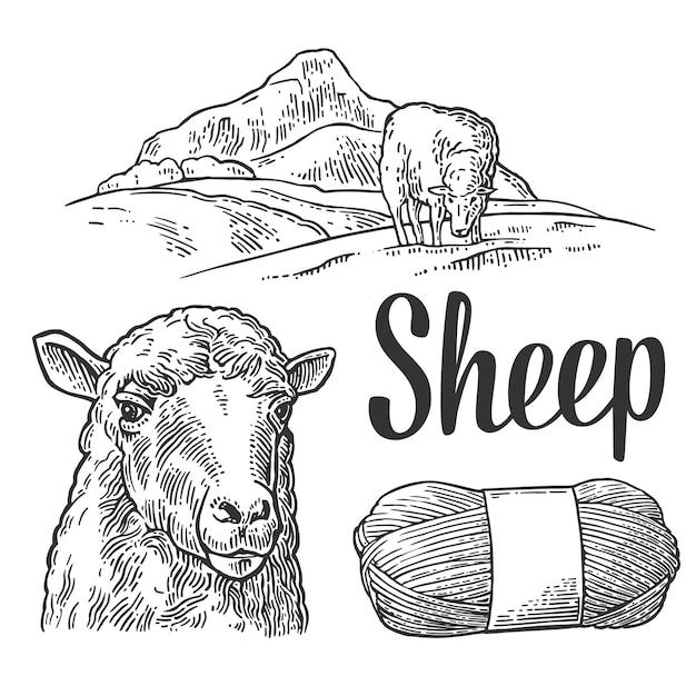 Овцы на лугу и пряжи. старинные гравюры Premium векторы