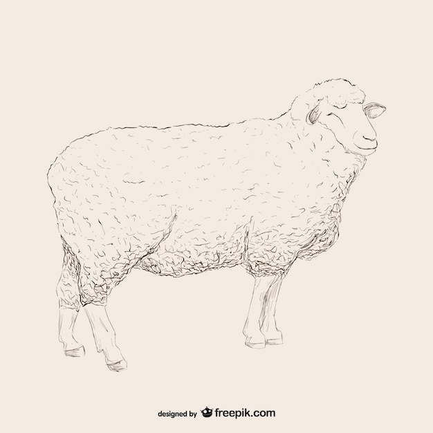 sheep sketch illustration free vector
