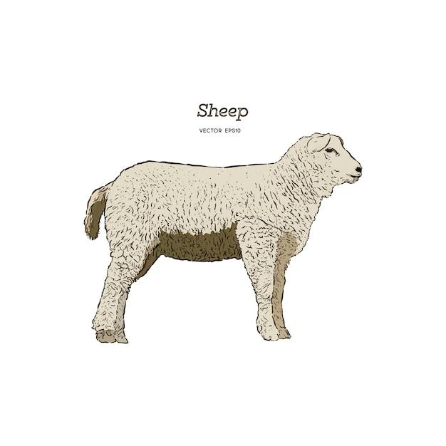 羊のスケッチスタイル Premiumベクター