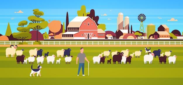 Пастух с палкой и собаками пасет стадо черных овец фермер мужского пола разводит овечью шерсть поле ферма поле сельская местность сельская местность пейзаж Premium векторы