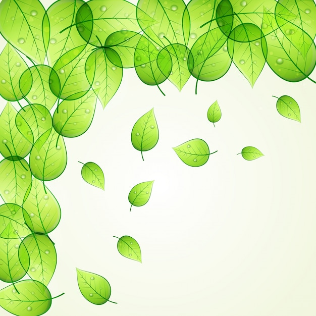 Shiny green leaves decorated background for\ Nature concept.