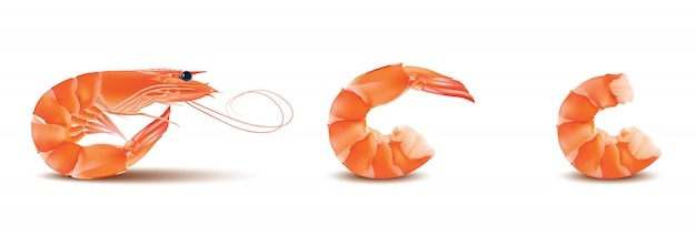 Shrimp or prawn with head and legs. Premium Vector