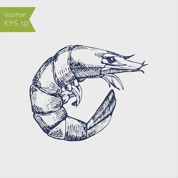 エビ海caridea動物彫刻イラスト Premiumベクター