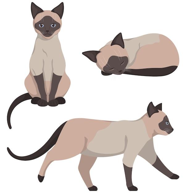 Siamese cat in different poses. beautiful pet in cartoon style. Premium Vector